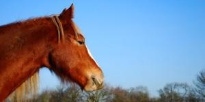 Basic Horse Care Imogen Head (www.basic-horse-care.com)