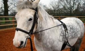 Basic Horse Care Lunging Roller (www.basic-horse-care.com)