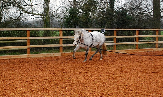 Basic Horse Care Lunging with roller left rein (www.basic-horse-care.com)