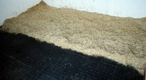 Mucking Out Shavings Clean (www.basic-horse-care.com)