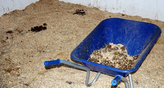 Mucking Out Shavings Dirty (www.Basic-Horse-Care.com)