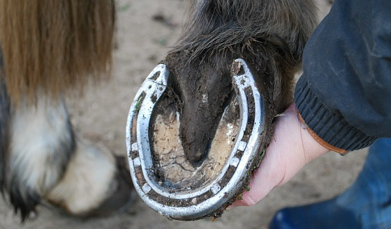 Picking Out Feet Clean (www.Basic-Horse-Care.com)