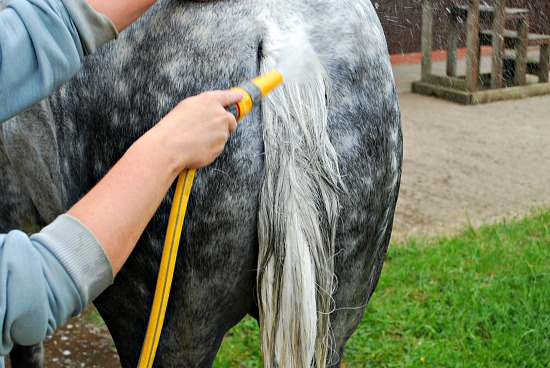 Washing tail (www.Basic-Horse-Care.com)