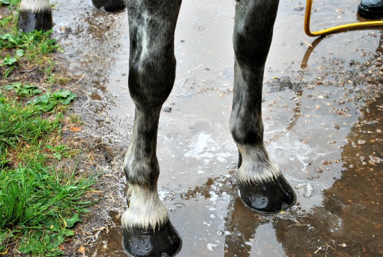 washing legs (www.Basic-Horse-Care.com)