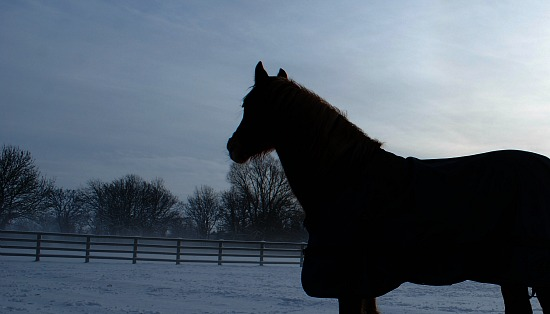 Basic Horse Care Snow Silhouette (www.basic-horse-care.com)