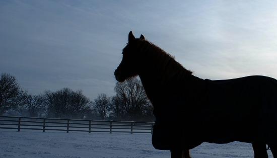 Basic Horse Care Snow Silhouette (www.basic-horse-care.com)
